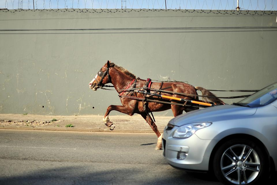 Horse galloping close to car on road. Source: Getty Images