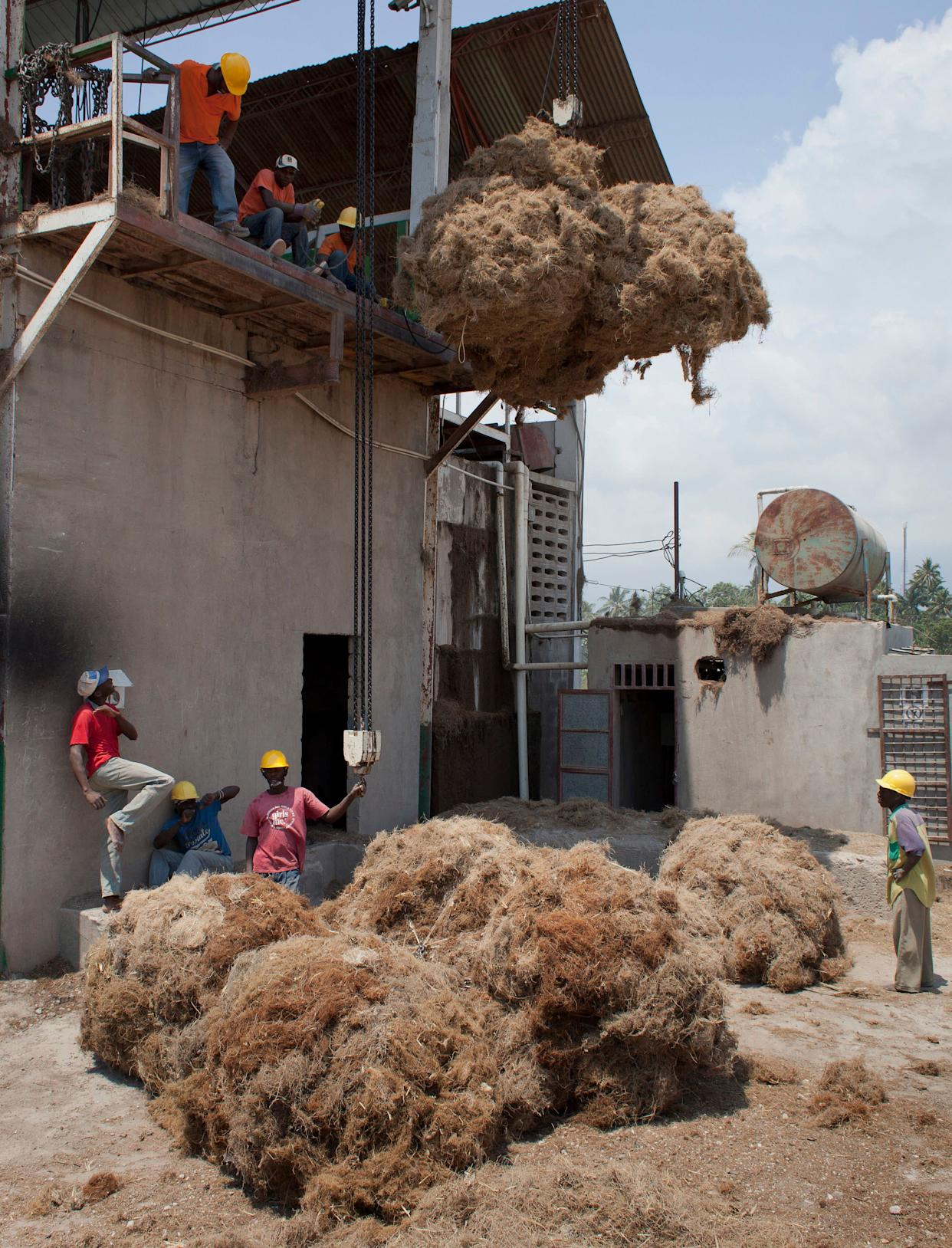 Workers move bales of Vetiver roots to be processed at the Agri-supply distillery on Haiti's southwest coast on March 27, 2014.
