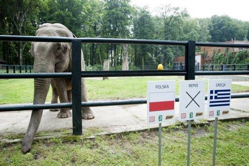 "Paul the amazing clairvoyant octopus may be dead but now he has a worthy heir, a Polish-based Indian elephant named Citta. The 33-year-old female elephant at Krakow zoo has ""predicted"" a win for the Poland football team in the 2012 European Championships"