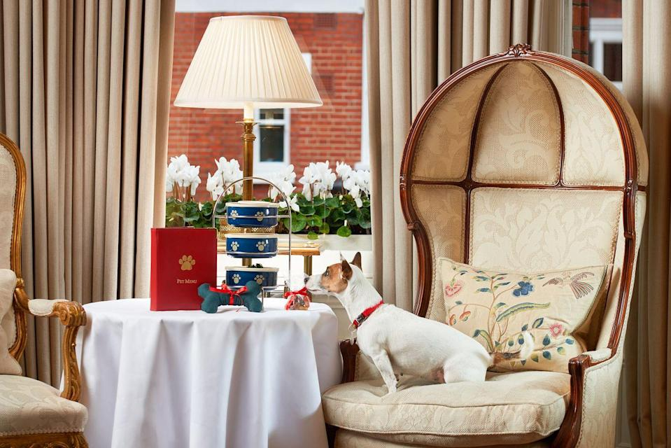 """<p>This boutique hotel in the heart of Knightsbridge offers your pet nothing but the best five-star service. Dubbed the VIPs (Very Important Pets), dogs at <a href=""""https://go.redirectingat.com?id=127X1599956&url=https%3A%2F%2Fwww.booking.com%2Fhotel%2Fgb%2Fegertonhousehotel.en-gb.html%3Faid%3D2070929%26label%3Ddog-friendly-london-hotels&sref=https%3A%2F%2Fwww.redonline.co.uk%2Ftravel%2Finspiration%2Fg35033360%2Fdog-friendly-hotels-london%2F"""" rel=""""nofollow noopener"""" target=""""_blank"""" data-ylk=""""slk:The Egerton House Hotel"""" class=""""link rapid-noclick-resp"""">The Egerton House Hotel </a>are treated like royalty, with their own pet concierge to ensure they arrive in style to an arrival message, embroidered towel, food and water bowls, toys, treats and, of course, a complimentary turn down treat.</p><p>On booking, you'll receive a form for you to mark down your pet's preferences, and they'll even get a chance to pick their very own dinner from the pet-friendly menu. A stay here will seriously raise your dog's standards - don't say we didn't warn you.</p><p><a class=""""link rapid-noclick-resp"""" href=""""https://go.redirectingat.com?id=127X1599956&url=https%3A%2F%2Fwww.booking.com%2Fhotel%2Fgb%2Fegertonhousehotel.en-gb.html%3Faid%3D2070929%26label%3Ddog-friendly-london-hotels&sref=https%3A%2F%2Fwww.redonline.co.uk%2Ftravel%2Finspiration%2Fg35033360%2Fdog-friendly-hotels-london%2F"""" rel=""""nofollow noopener"""" target=""""_blank"""" data-ylk=""""slk:CHECK AVAILABILITY"""">CHECK AVAILABILITY</a></p>"""