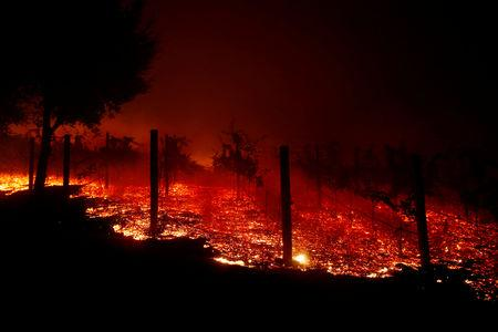 FILE PHOTO:  A vineyard burns overnight during a wildfire that destroyed dozens of homes in Thousand Oaks