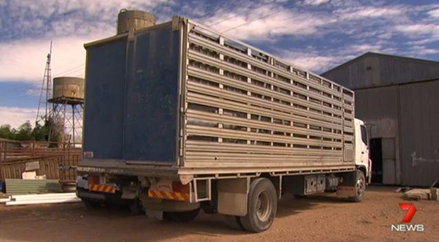 Mr Carter was working to unload buffalo from a truck when the accident happened. Photo: 7 News