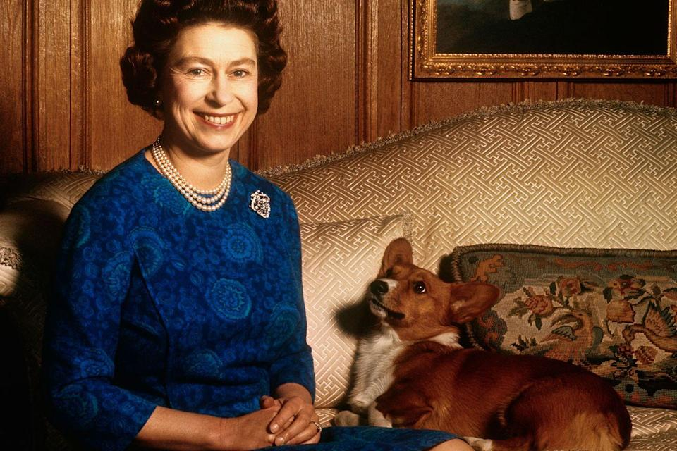 <p>The Queen's corgis have power, too. They essentially have free rein to do as they please because it's common knowledge in the palace that nobody is allowed to yell at the dogs, no matter their behavior.</p>