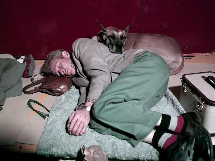 A man naps with his great Dane at the Westminster dog show at Madison Square Garden in 1957.