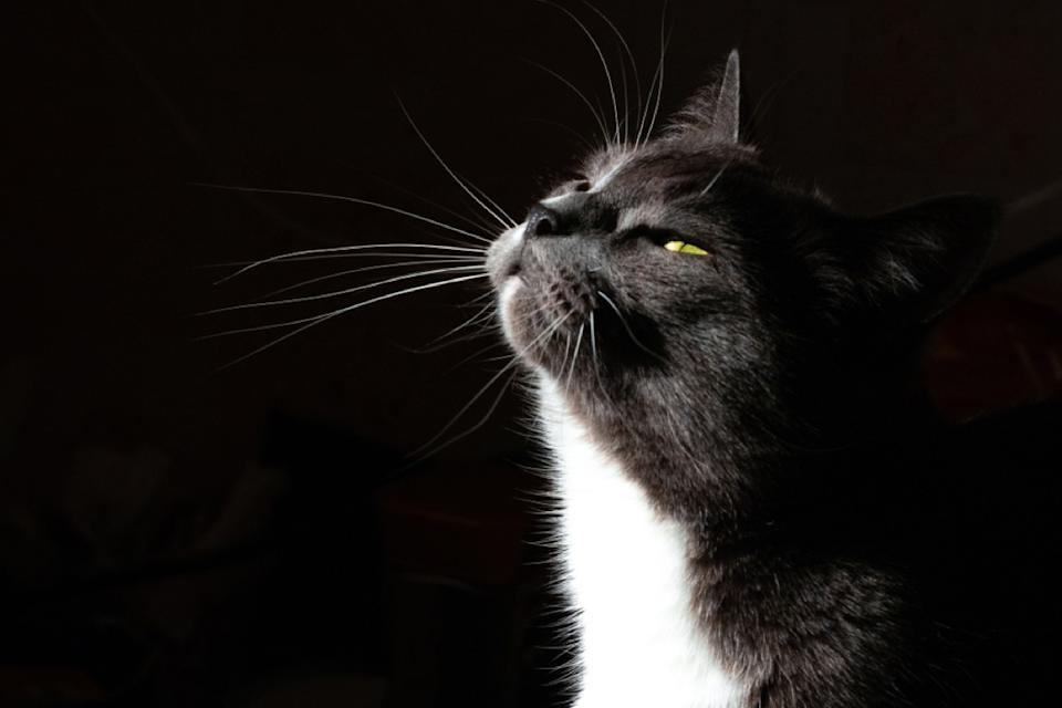 black and white cat in dark room