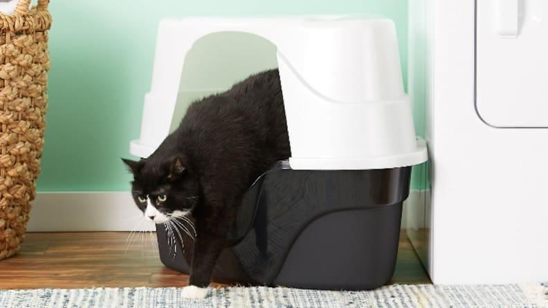A hooded litter box will help to minimize mess in your home.