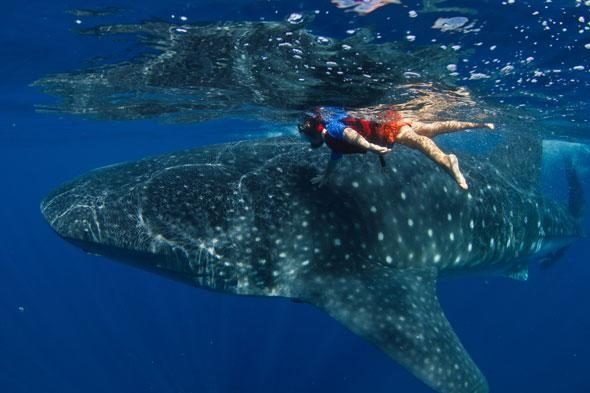 Five-year-old boy swims with giant whale shark