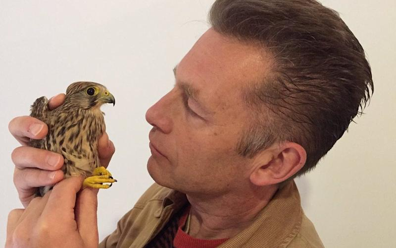 Chris Packham with a Kestrel he says was shot down illegally in Malta  - Credit: Chris Packham