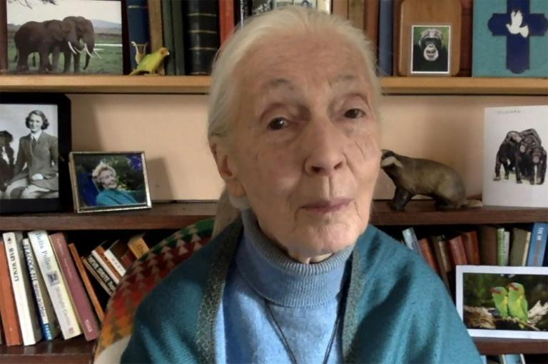 Goodall, 87, has dedicated her life to better understanding the animal kingdom and promoting conservation efforts