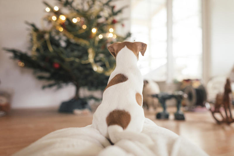 That beautifully-decorated Christmas tree may be a potential hazard for your furry animal friend. (Photo: Getty Creative)