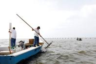 Michael Dasher, Sr., lifts tongs full of oysters from the bottom of Apalachicola Bay as he works with his son Michael Dasher, Jr., in a boat off Eastpoint, Florida