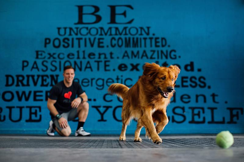 Happy Go Lucky Golden Retriever Is Ideal Gym Buddy For His Beefy