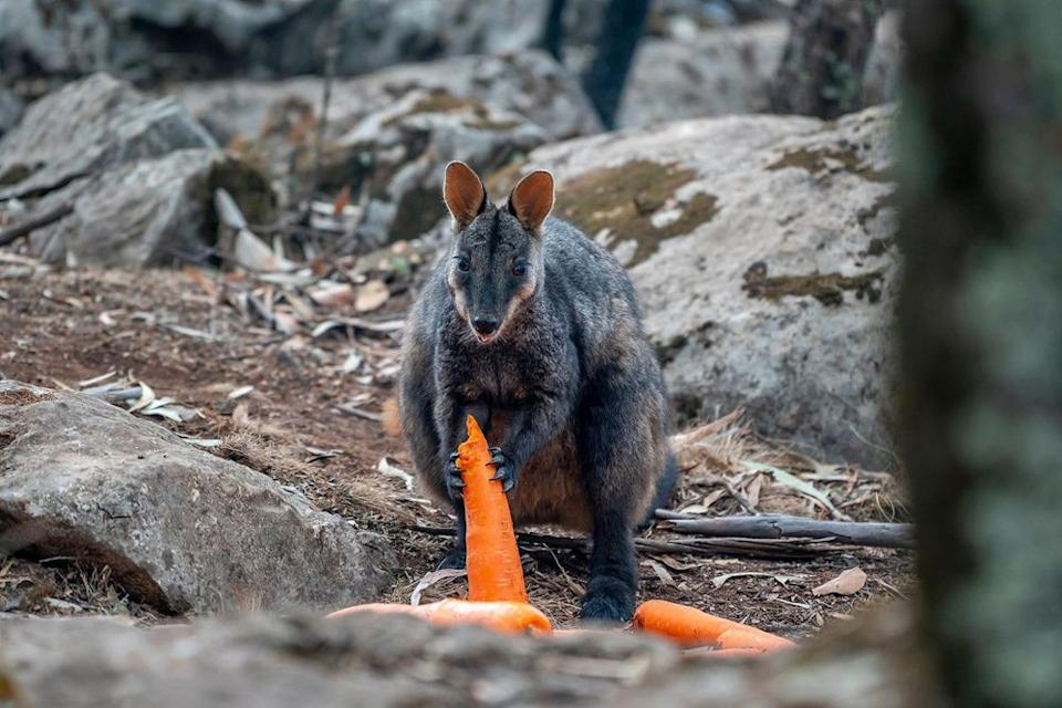 Stranded animals in Australia | NSW Government/Facebook