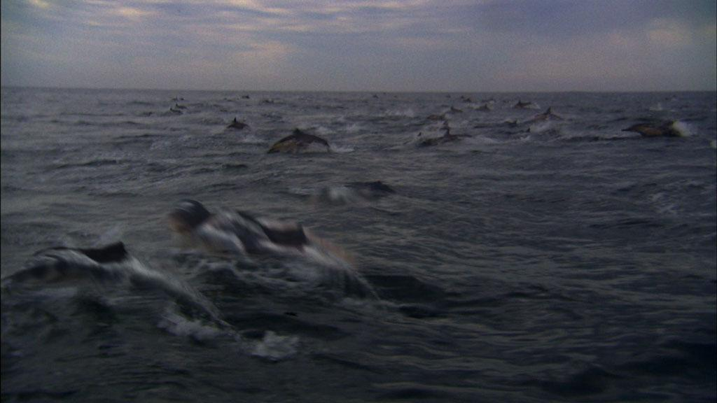 The mermaids and dolphins are en route to the sardine hunt.