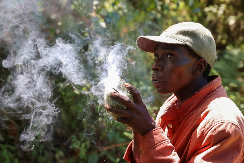 A member of the Ogiek forest inhabitants community blows on a tinder to produce smoke to extract honey from beehives, inside the Eburru forest reserve