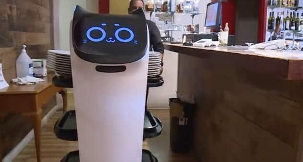 Robbie the robot working a shift at Mantra Restaurant in Victoria, B.C. (CHEK News  - image credit)