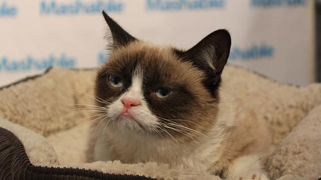 Grumpy Cat: The Internet's Favorite Sour Cat Draws Crowds at SXSW (ABC News)
