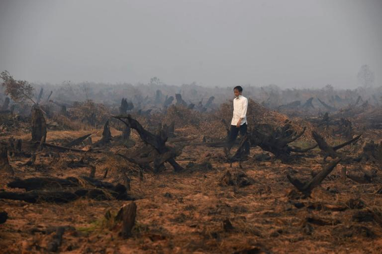 Photo taken in September 2015 shows Indonesia's President Joko Widodo inspecting a peatland clearing engulfed by fire: the blazes are breaking out again
