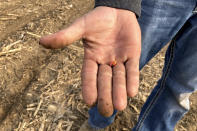 Farmer Lance Unger holds a corn seed to be planted in one of his fields where he uses minimum tillage practices to improve yields and keep more carbon stored in the soil, in Carlisle, Indiana on April 6, 2021. The Biden administration is encouraging government and private initiatives that encourage such practices on farms as one strategy for fighting climate change while boosting the rural economy. (AP Photo/John Flesher)