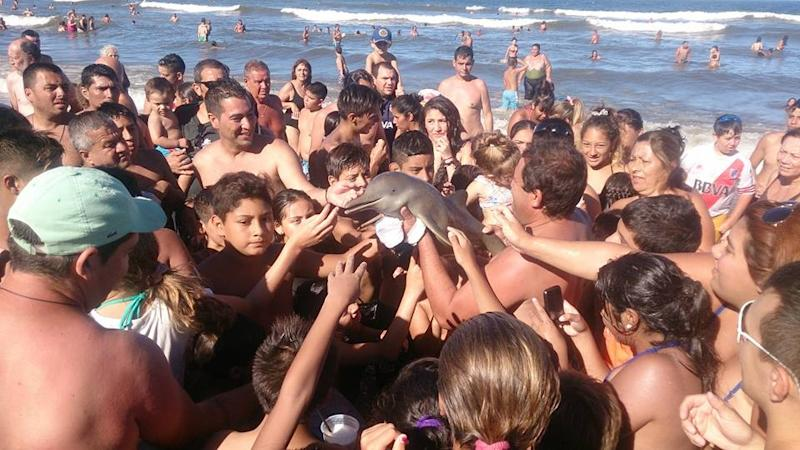 Endangered baby dolphin dies after beachgoers pass it around for selfies