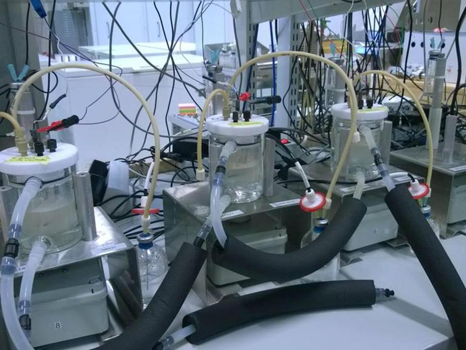 The 'protein reactors' are the size of a coffee and produce a spoonful of the powder in a fortnight (Neo-Carbon Energy/Lappeenranta University of Technology)