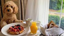 <p>Already a nation of dog lovers, Britain's pet-owning population swelled over the past year, with 3.2 million households buying animals since the start of the pandemic. If you're one of them, you're probably wondering where you can travel to that will let your new four-legged friend come along, too – here's our pick of the UK's best dog-friendly hotels.</p>