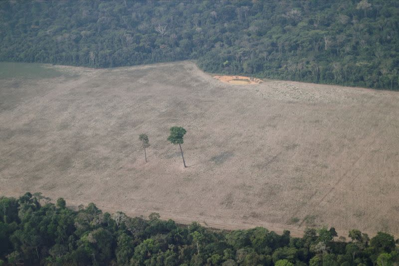 FILE PHOTO: An aerial view shows a tree at the center of a deforested plot of the Amazon near Porto Velho, Rondonia State