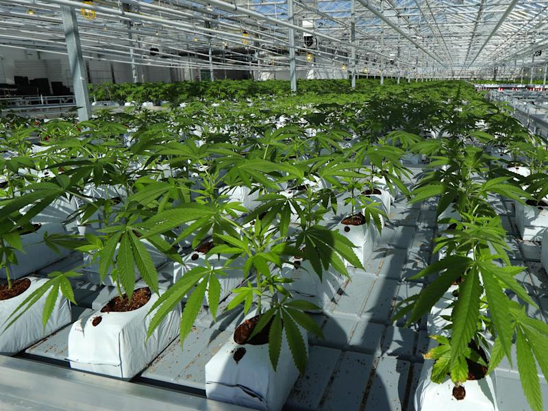 Budding industry: Tight regulations on cannabis commerce don't apply to the sovereign Mohawks of the Bay of Quinte: AP