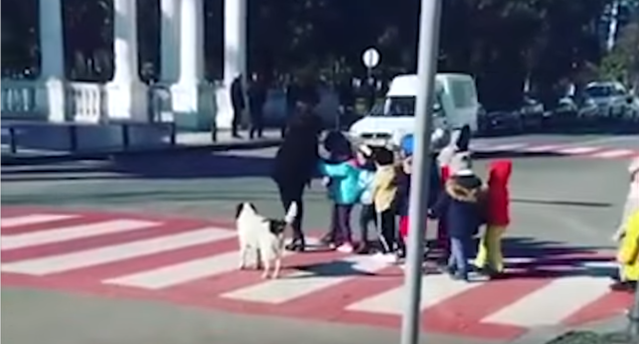 Good News: Dog 'guards' children as they cross the street, barks at errant drivers