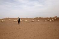 The Wider Image: The Great Green Wall: China's farmers push back the desert one tree at a time