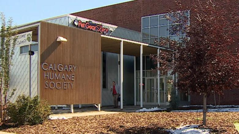 Calgary Humane Society to re-open Monday after parvo virus