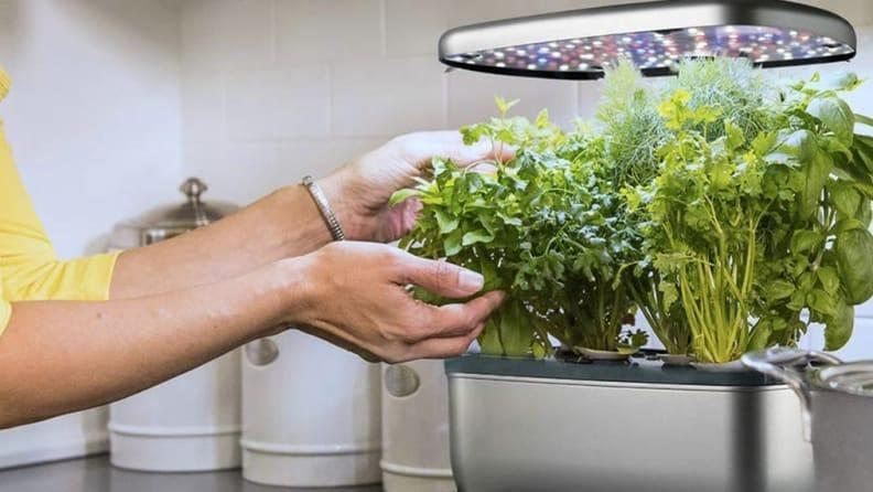 You don't need an entire garden to grow herbs these days.