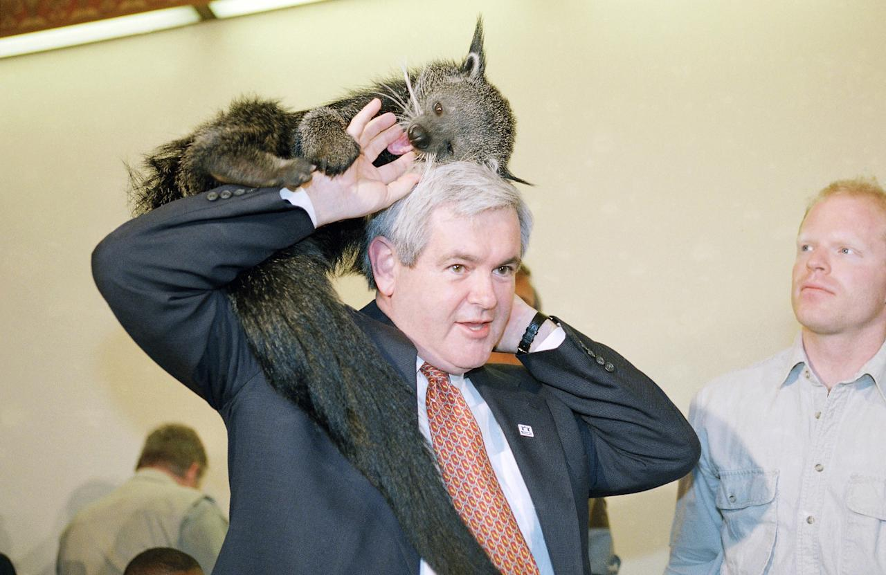 "Newt Gingrich holding animals  As a child, Newt Gingrich didn't dream of the White House: he wanted to run a zoo. In a November 2011 interview with ABC and Yahoo, Gingrich said that the happiest moment of his life was ""either looking for dinosaurs with Jack Horner in Montana, or being with my wife Callista on the Serengeti Plain, taking pictures of animals.""  After his unsuccessful run for the Republican nomination, the candidate made it a point to visit zoos, tweet about the charm of FBI dogs, and admire armadillos. Slideshow gold. (Photo by Joe Marquette/AP)"