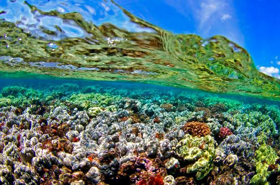 Climate Change Will Not Spare an Inch of Global Ocean, Study Finds