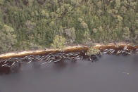 In this image made from aerial video shows numerous stranded whales along the coastline near the remote west coast town of Strahan on the island state of Tasmania, Australia on Sept. 23, 2020. More pilot whales were found stranded on an Australian coast Wednesday, raising the estimated total to almost 500 in the largest mass stranding ever recorded in the country. (Australian Broadcast Corporation via AP)