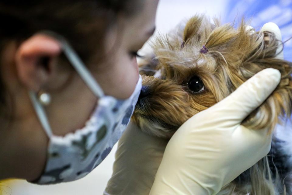 A vet and a Yorkshire Terrier dog named Agusha at a vet clinic of the Aibolit Plus veterinary chain. The self-isolation regime in Russia is extended until 31 May in order to prevent the spread of the novel coronavirus. People are allowed to visit vet clinics as long as sanitary regulations and social distance are observed and special precautions are taken. (Photo by Mikhail Tereshchenko\TASS via Getty Images)