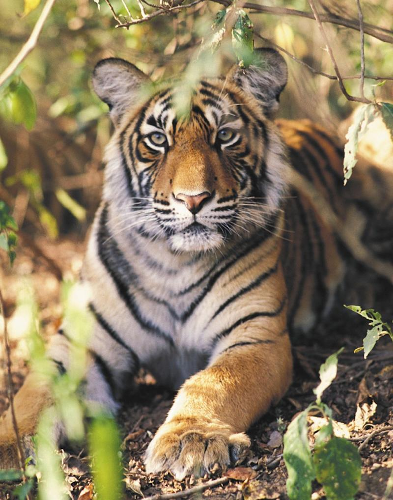 Photo credit: Courtesy of Ranthambore National Park