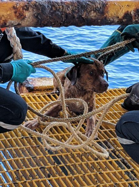 PHOTO: Workers from the Chevron Thailand Exploration and Production Ltd. oil rig rescued a dog swimming 137 miles offshore in the Gulf of Thailand on Friday. (Vitisak Payalaw)