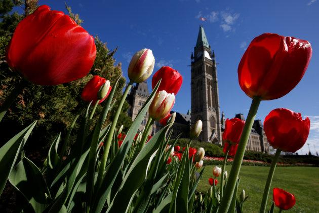Tulips frame the Peace Tower on Parliament Hill in Ottawa, on May 14, 2018.