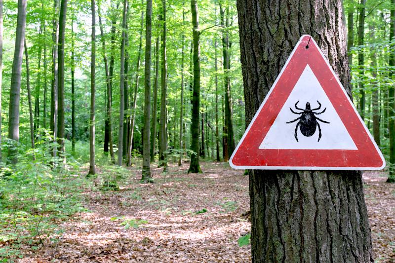 8 Tick-Borne Illnesses That Aren't Lyme Disease