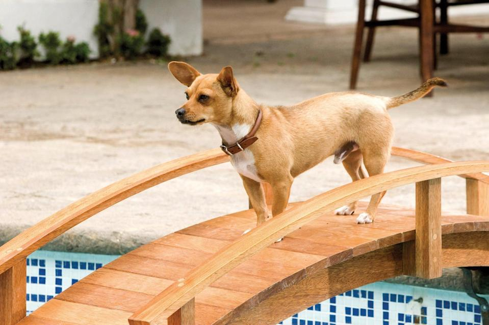 """<p><strong>HBO Max's Description:</strong> """"Hold your tacos! In this hilarious comedy, Chloe the Chihuahua--the most pampered pet in Beverly Hills-winds up lost in the middle of Mexico. Can her scroungy new stray pals help get this designer dog back to the upscale lifestyle she once knew?""""</p> <p><a href=""""https://play.hbomax.com/feature/urn:hbo:feature:GXRtqjA8465VLqQEAAAC3"""" class=""""link rapid-noclick-resp"""" rel=""""nofollow noopener"""" target=""""_blank"""" data-ylk=""""slk:Watch Beverly Hills Chihuahua on HBO Max here!"""">Watch <strong>Beverly Hills Chihuahua</strong> on HBO Max here!</a></p>"""