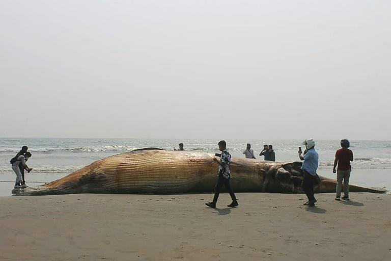 Officials said the whales could have died after consuming sea pollutants