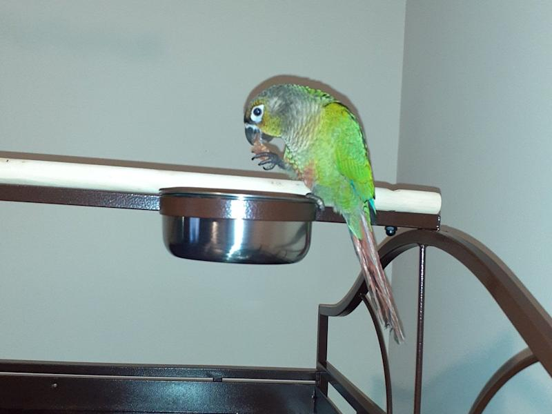Louie, the pet parrot who saved the lives of its owners, died in the fire: SWNS