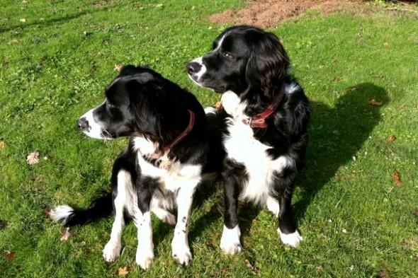 Farmer shoots dogs dead after escaping kennels while owners on holiday