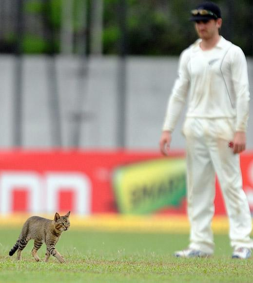 New Zealand cricketer Kane Williamson looks on as a cat walks on the outfield during the third day of the second and final Test match between Sri Lanka and New Zealand at the P. Sara Oval Cricket Stadium in Colombo on November 27, 2012. AFP PHOTO/ LAKRUWAN WANNIARACHCHI