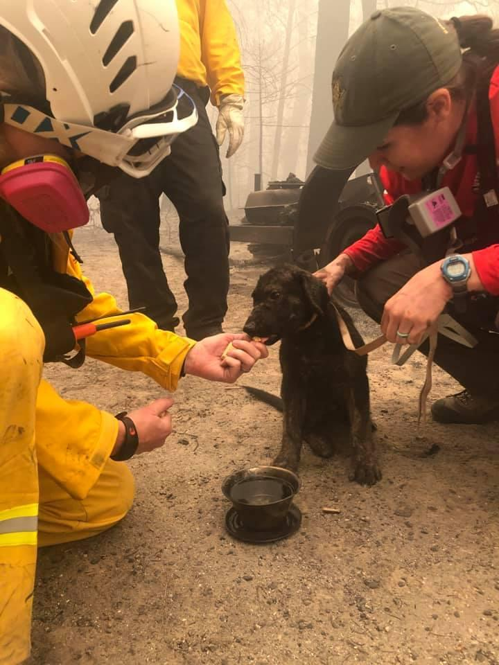 Butte County Sheriff's Office found the little dog hiding in a destroyed home as they searched a burnt-out area (Butte County Sheriff)