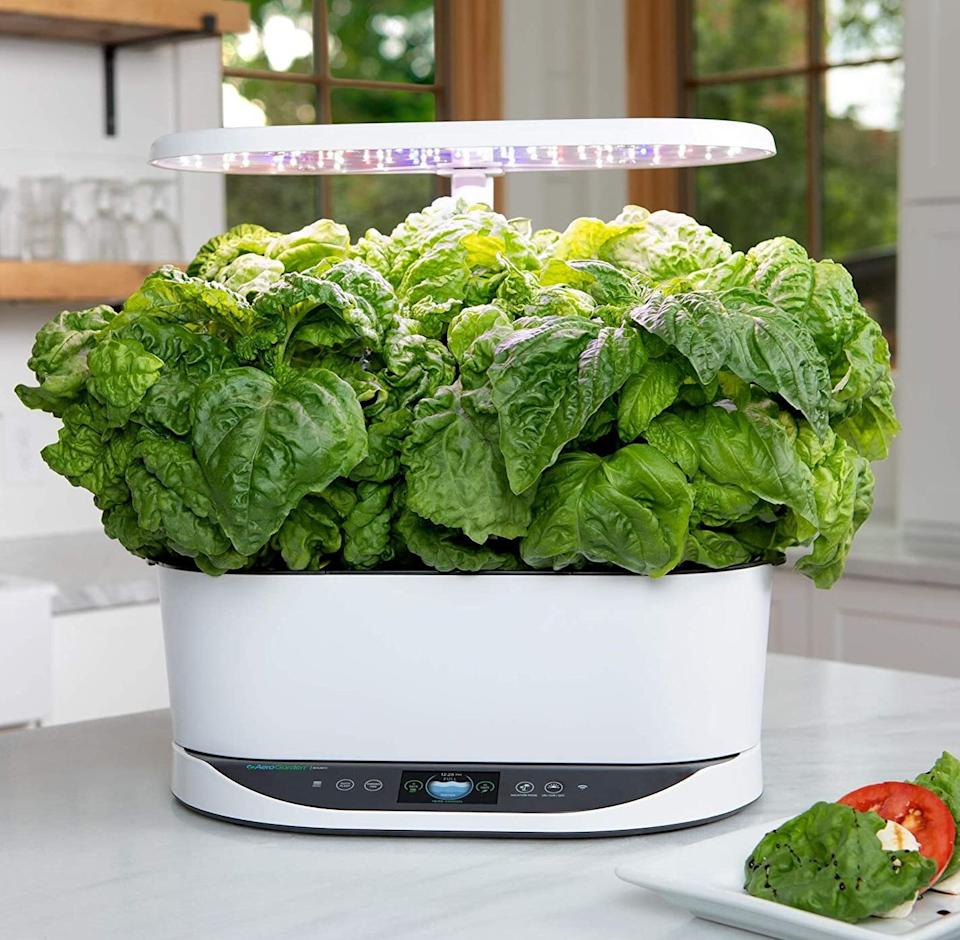 """Not only will it look super sleek on your countertop, but it'll give you direct access to fresh herbs without having to start an outdoor garden.It includes nine pods with basil (two pods), Thai basil, curly parsley, Italian parsley, thyme, chives, dill and mint.<br /><strong><br />Promising review:</strong>""""We have really enjoyed growing our herbs with the AeroGarden bounty basic. Set up took 'basil'-cally five minutes, and our herbs were sprouting in no 'thyme.' We have never had a garden of our own, so it has been a big 'dill' watching our herbs grow. The size is great for our medium size kitchen. It fits like it was 'mint' to be! In all seriousness the AeroGarden has been a treat to have. It's amazing how easy it was to set up, maintain with the digital reminders, and watch the herbs grow quickly!"""" —<a href=""""https://amzn.to/3mSvVCF"""" target=""""_blank"""" rel=""""nofollow noopener noreferrer"""" data-skimlinks-tracking=""""5723569"""" data-vars-affiliate=""""Amazon"""" data-vars-asin=""""none"""" data-vars-href=""""https://www.amazon.com/gp/customer-reviews/R1NMMEN4Q4E599?tag=bfjasmin-20&ascsubtag=5723569%2C29%2C31%2Cmobile_web%2C0%2C0%2C14870771"""" data-vars-keywords=""""cleaning"""" data-vars-link-id=""""14870771"""" data-vars-price="""""""" data-vars-product-id=""""1"""" data-vars-product-img=""""none"""" data-vars-product-title=""""Placeholder- no product"""" data-vars-retailers=""""Amazon"""">JJ</a><br /><br /><strong>Get it from Amazon for <a href=""""https://amzn.to/3dnldks"""" target=""""_blank"""" rel=""""noopener noreferrer"""">$299.95+</a> (available in four styles).</strong>"""