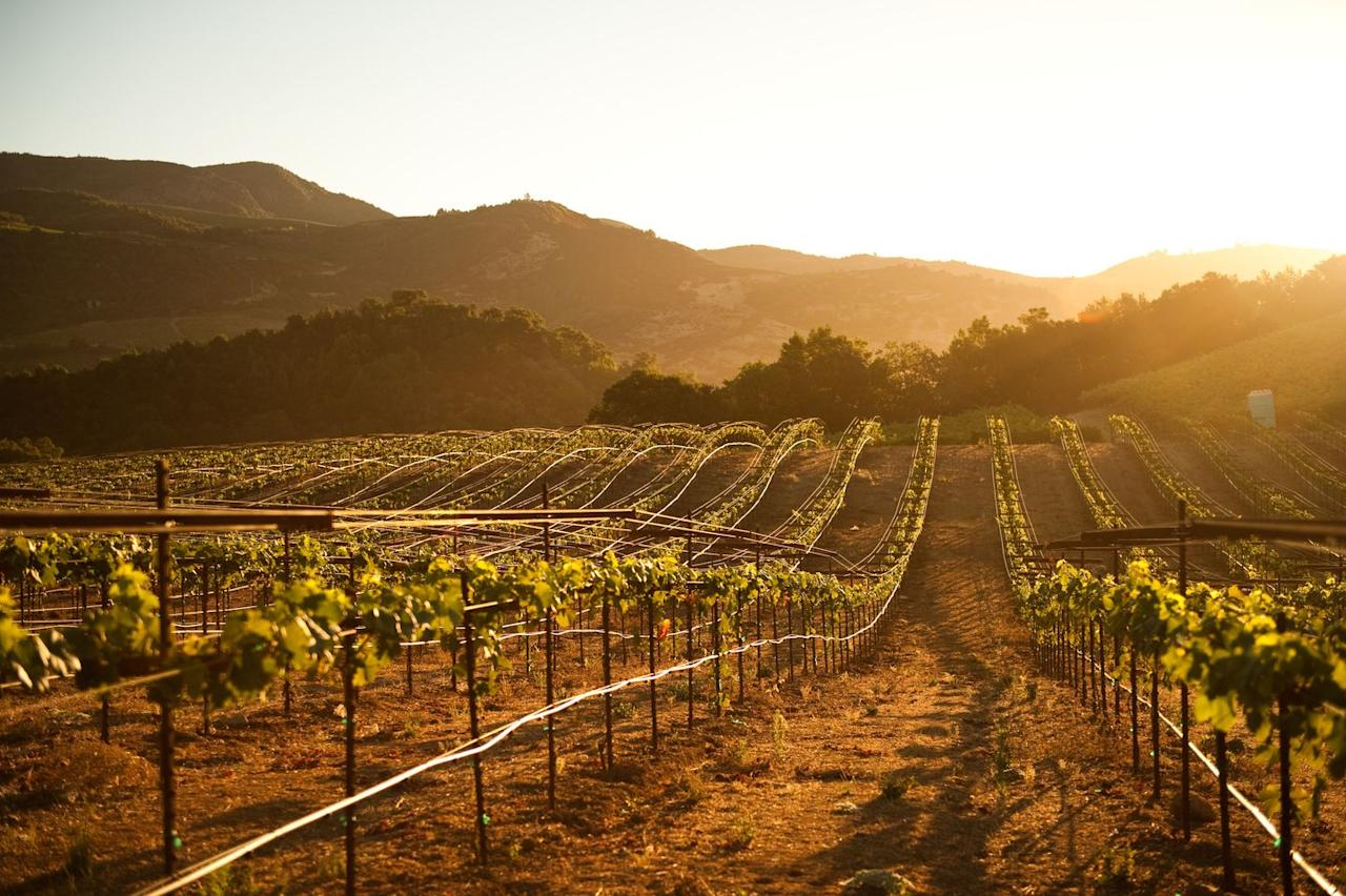 """<p>If you and your gals can't get enough Chardonnay, say hello to Sonoma. Perfectly situated in California's wine country, Sonoma is home to more than 425 wineries. Stay at a place like the <a href=""""https://www.tripadvisor.com/Hotel_Review-g33107-d478101-Reviews-Ledson_Hotel-Sonoma_Sonoma_County_California.html"""" target=""""_blank"""">Ledson Hotel</a> where every room is equipped with king-sized beds, whirlpool tubs, a fireplace, and a balcony where you can split a bottle and reminisce. </p>"""