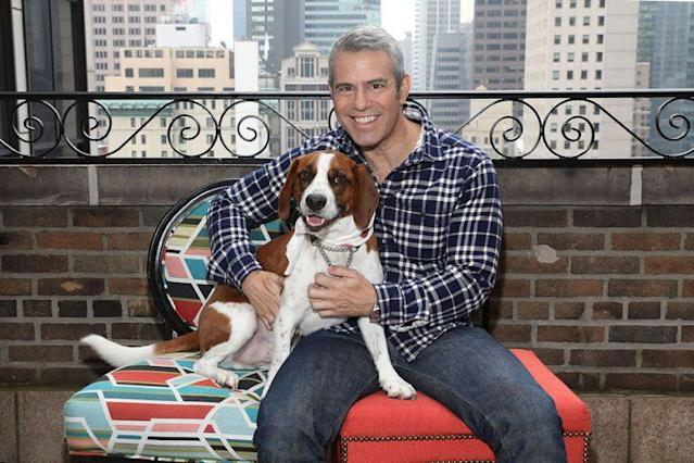 Andy Cohen and his rescue dog, Wacha, celebrated Wacha's becoming an honorary Mutt-i-gree on April 20. (Photo: Amy Sussman/AP Images for Purina One)