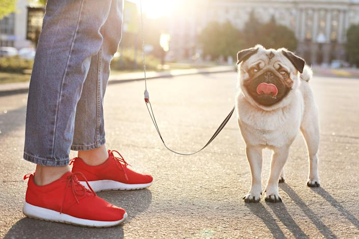 "<strong>For whenever you're feeling:</strong> Like you need some fresh air; like you want some exercise; like you want to discover a new part of your 'hood; like you're in the mood for some sweet doggy affection. <a href=""https://www.huffingtonpost.ca/entry/walking-dog-benefits_ca_5de12ac0e4b0d50f32a0f975"" target=""_blank"" rel=""noopener noreferrer"">Read more here.</a>"